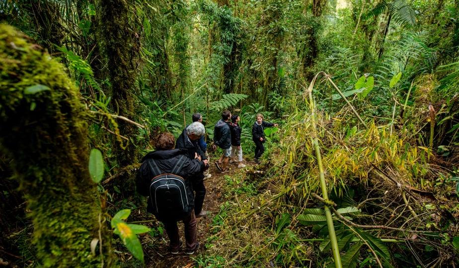 Mitten im Amazonas Regenwald