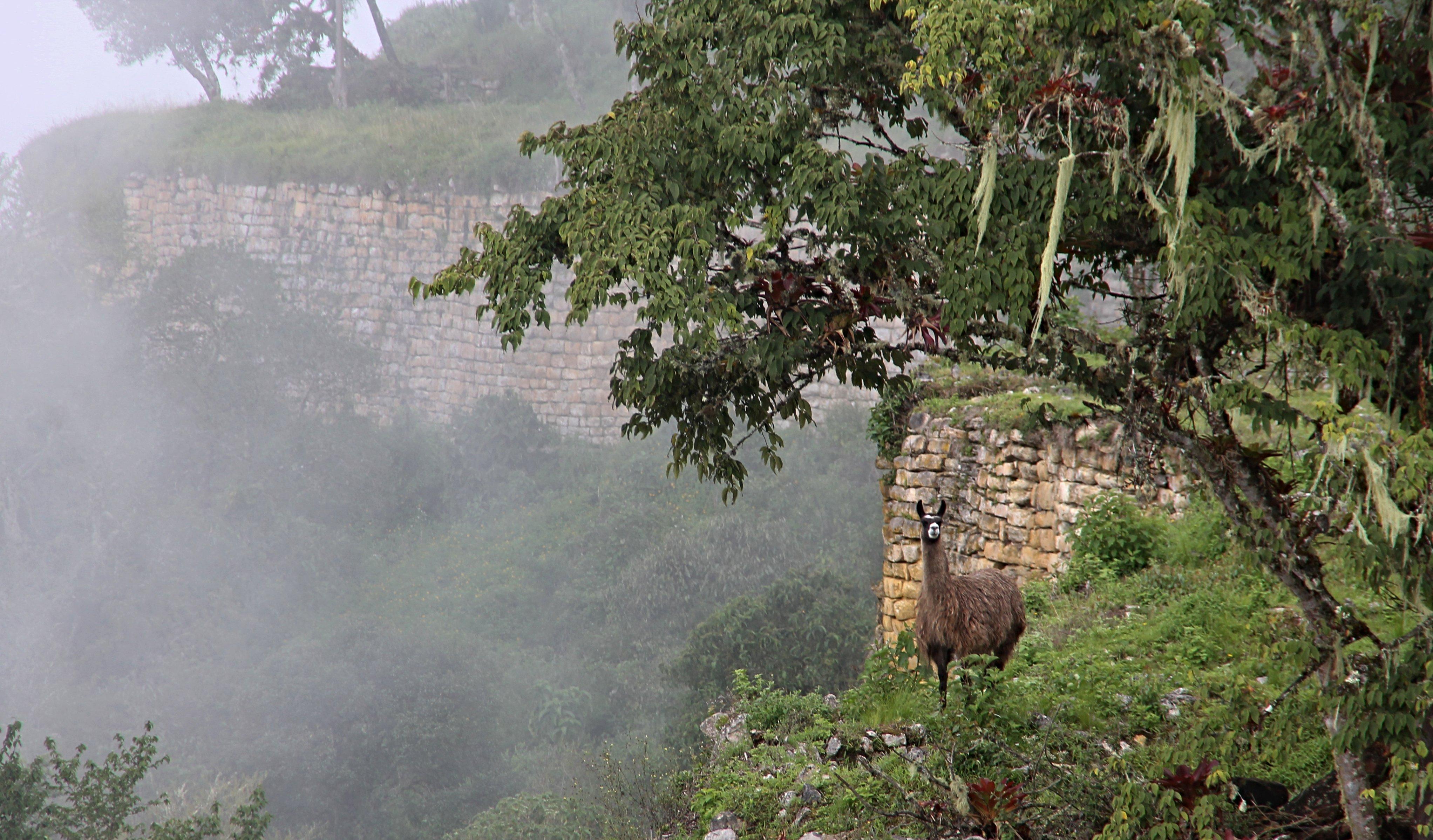 Die bekannteste Festung der Chachapoyas ist Kuelap, ein beliebtes Ausflugsziel ab der Stadt Chachapoyas.