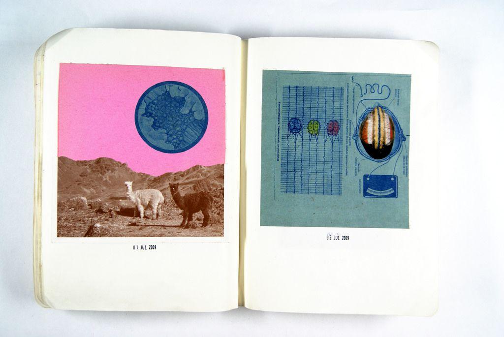Liebes Tagebuch, heute habe ich endlich Alpakas gesehen! Quelle: SONY DSC.