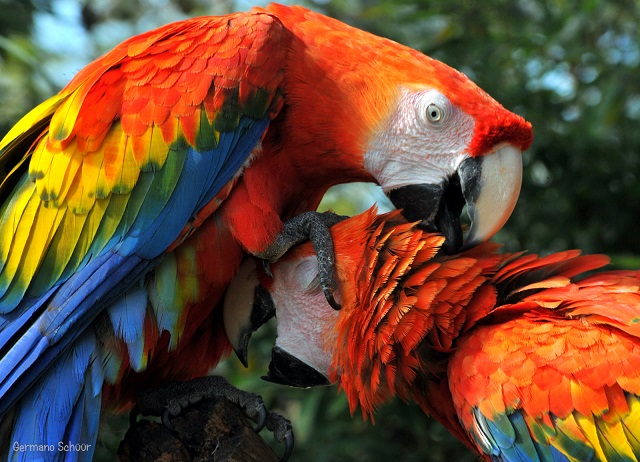 Farbvielfalt Südamerika: Brasilien
