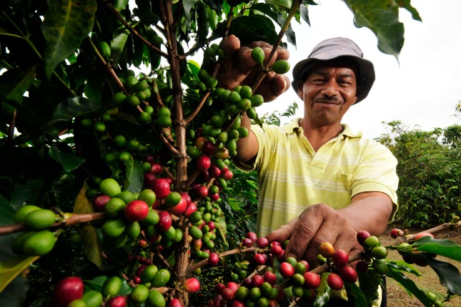 Kolumbianischer Kaffebauer