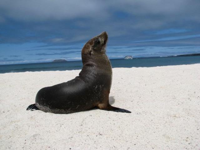 Farbvielfalt Südamerika: Galapagos