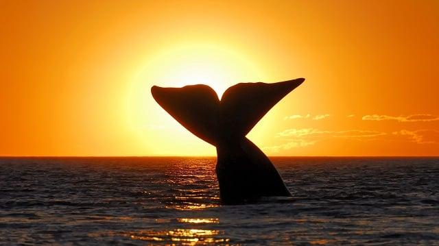 Farbvielfalt Südamerika: Sonnenuntergang Patagonien