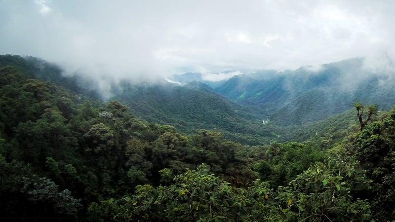 Bergnebelwald wie hier in Ecuador scheint besonders in den frühen Morgenstunden oft sehr mystisch.