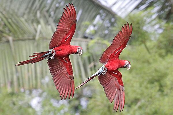 Manu Nationalpark Peru