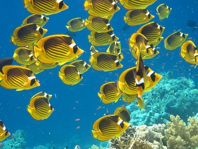 Farbvielfalt Südamerika:Unterwasserwelt Venezuela