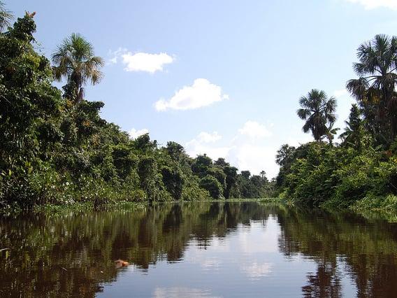 Venezuela Sehenswürdigkeiten: Orinoco Delta