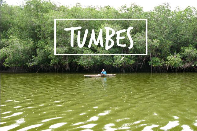 Mangroven von Tumbes