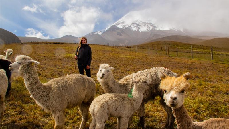 Mit Alpakaherde auf über 3.800m in der Schutzzone vor dem Chimborazo: Ein Bild, das so noch vor 20 Jahren nicht entstanden wäre.