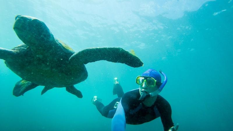 Tauchen zwischen Schildkröten, Meeresechsen und Mondfischen: Nur auf Galapagos!