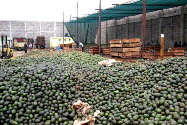 Avocado wurden durch die Auswirkungen des Avocado-Hypes zum beliebten Massenimport