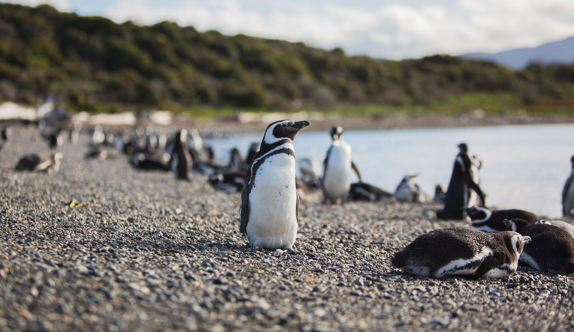Die Valdez Halbinsel bietet Lebensraum für Tierarten von Walen bishin zu Pinguinen. Quelle: Viventura
