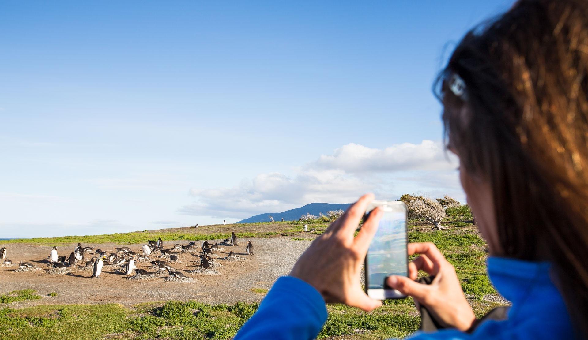 Magellan-Pinguine sichtet man am Besten von September bis April. Quelle: Viventura