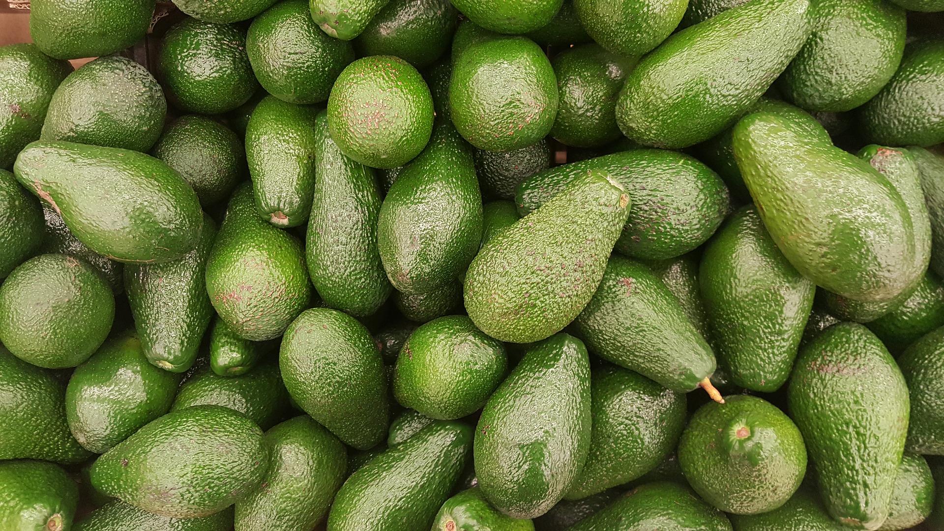 avocado-2351191_1920